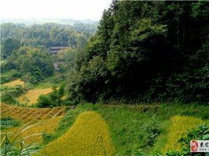秀美乡村之新安舍米湖.一脚踏三省.擦茶溪。