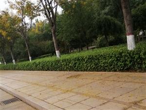秋天的脚步近了,慢慢的来到博兴,你感觉到了一丝丝凉爽了吗