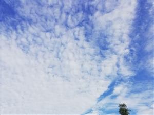 静赏繁华,素笺心语,于静静的欣赏中,淡做云卷云舒,万事都化为回眸一笑。