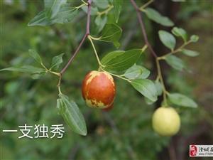 《水�古村●秋景》文/金��
