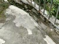 师部社区的厕所漏水,多次反应无人过问,请领导重视整修