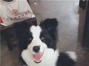 寻狗启示、由于主人十分爱狗、丢了几天伤心欲绝、请有看到或者捡到的联系一下、感谢、