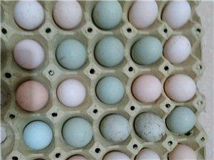 柴鸡蛋乌鸡蛋
