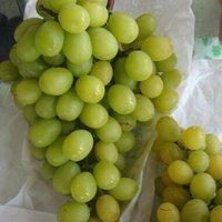 玫瑰香葡萄成熟了,青青的葡萄,玫瑰的味道,�f�@�摘10元一斤,