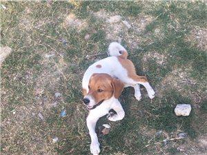 三天,��l狗跟著我回家,�@是狗�太好�幔靠晌艺娴牟幌�g�B狗!我也�]有地方�B,�因�橛泻⒆诱娴牟幌胱�他