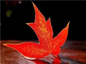 ?红叶?拾起一片,深红叶语触起灵魂佛曰,是禅禅曰,是佛我道是秋---