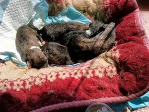 捡了一窝刚出生的小狗