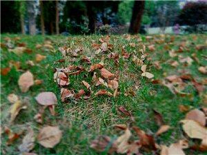 原创《秋夜喜雨》