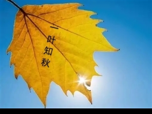 《秋韵》文/金��