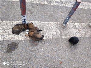 四只流浪狗