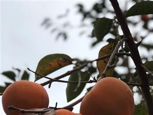 秋的颜色,收获的季节