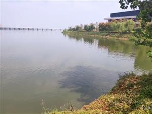 ���d湖
