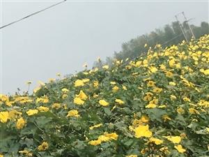 雨后的小�S花,格外漂亮,金�S金�S的。猜猜什么花。