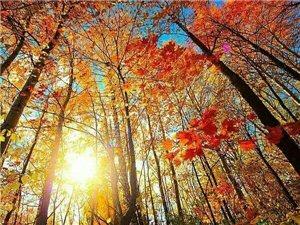 秋天美景欣赏!
