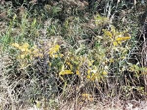 秋天的景色,绿中夹黄,又不失生机