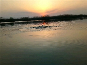 偃师河畔美景