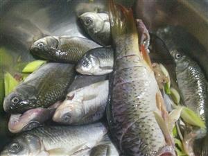 会做鱼的来推荐下菜谱吧