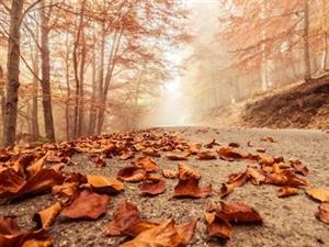 我站在满目秋黄的季节看人间烟火