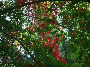 《深秋的色彩》作者:胡�钌钋锏纳�彩很�庾�我把秋的眷�僮x懂看晚秋那美��的朝�一�一��饪s著幸