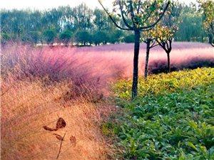 天汉湿地公园风景如画