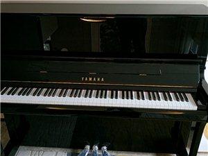 专业钢琴调音、维修、保养!