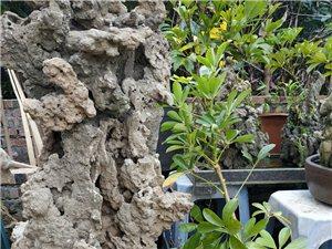新款假山石到货,川南特有砂片石,沙积石