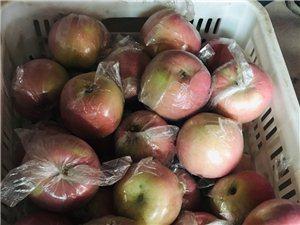 红富士苹果上市了