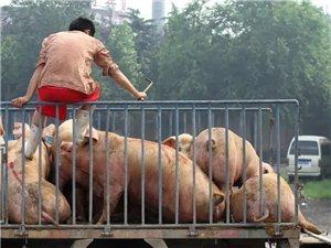 你怎么看待猪肉价格上涨