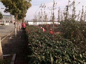 阳丰镇朱屯村贫困户组织开展志愿服务活动