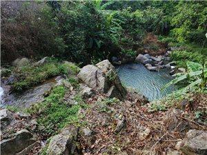 里湖竹林山