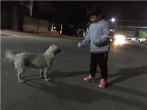 小孩和狗和睦共处