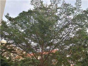 赠送树一棵,需要的联系
