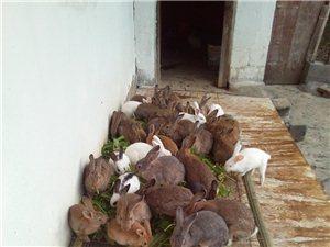 可爱的小兔子有意善养的与本人联系电话18071920262