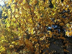 秋的�L�