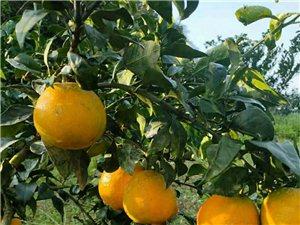 来自宝飞镇的自产自销水果
