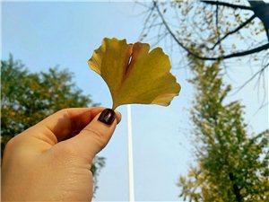 秋是安�o的,可以�o下心�砥肺渡�活的每一段~