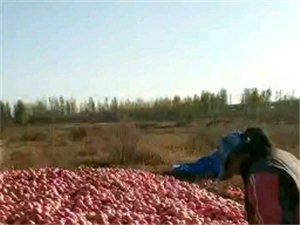劲爆,水晶苹果和红富士批发(果园直销,规格75型号20斤65元/箱,80规格型号30斤90元/箱)