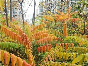 美丽的深秋景色宜人2019-11-8
