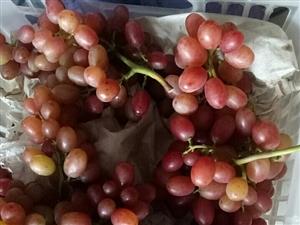 来吧、来吧……朋友们,自然生草种植的天然无核无公害葡萄,没有任何激素,脆甜爽口吃着放心。吃过都说口感