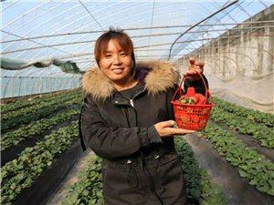 立冬季节草莓红