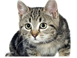 想领养一只小狸猫