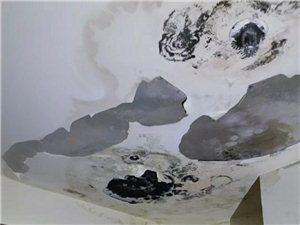 墙面涂料起碱、发雹怎么办?