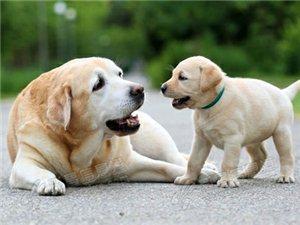 """你的狗相当于人类几岁?忘掉""""乘以7""""吧,科学家给出最准公式"""