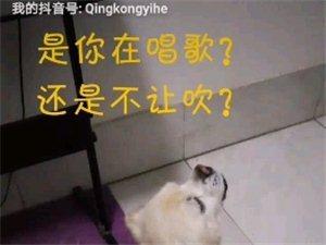 一��怪怪的狗??