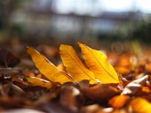 黄叶片片暖初冬…