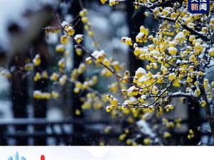 """#小雪到了#!】今天22时59分,小雪节气。①天气寒冷,降水形式由雨变雪,但""""地寒未甚"""",雪量不大,"""