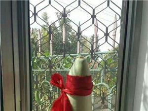 葫芦张海菲翠宝物临窗高,红线系颈飘中腰!八仙酒醉难分辩,