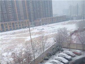 昨晚的雪全香河人都嗨了吧