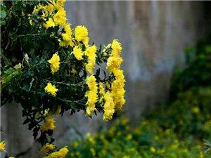 小�^巷子里的花��