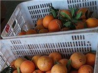 收购花皮橙,有的请联系